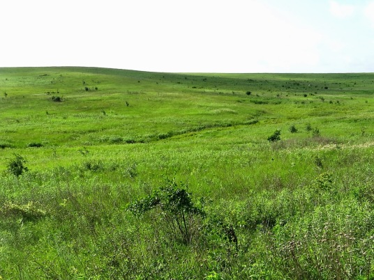 Image result for Prairie southern minnesota